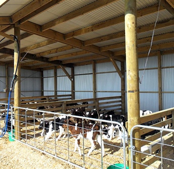 Calf / Feed Shed